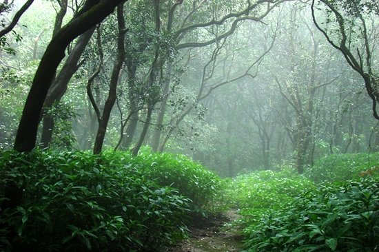 Matheran, Indie: Misty overgrown jungle trail