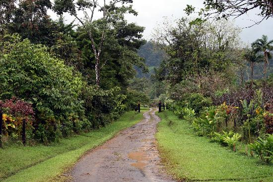 La Anita Rainforest Ranch : The Road to Somewhere!