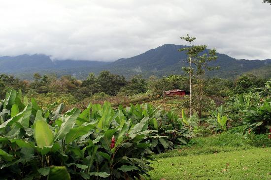 La Anita Rainforest Ranch: A Million Dollar View