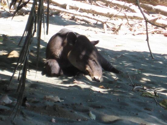 Finca Exotica Ecolodge: Natur und Tierwelt entdecken