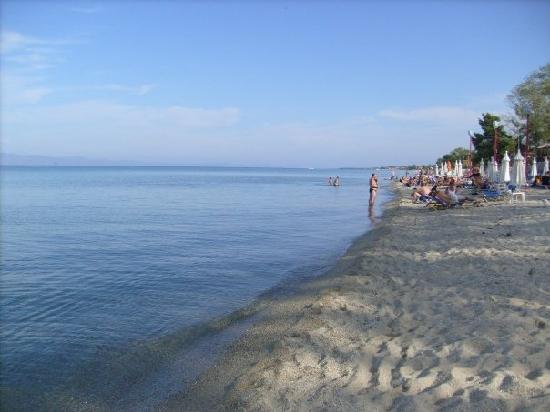 Hotel Calypso : beach
