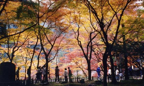 Korankei: 紅葉は見事!人出もすごいが…。