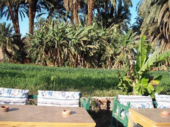 Banana Island (Gezira el-Mozh): Luxor, Banana island