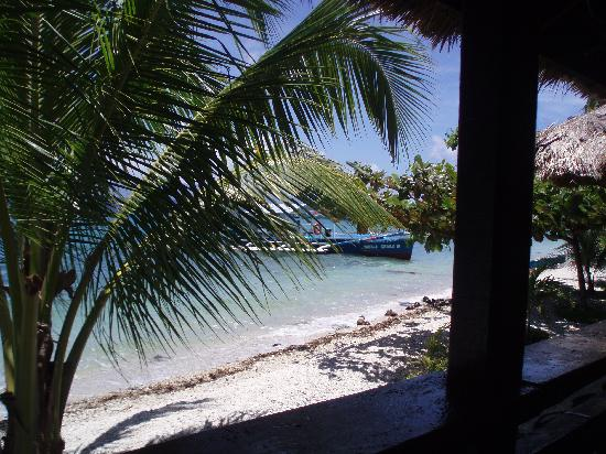 Peters Dive Resort: View from the room!