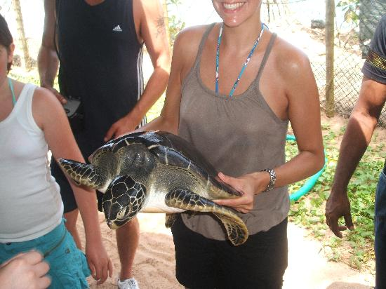 Hotel Mermaid & Club : one of the bigger occupants of the turtle sanctuary there for research