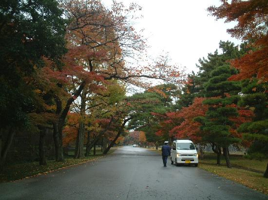 Imperial Palace: 皇居内の紅葉