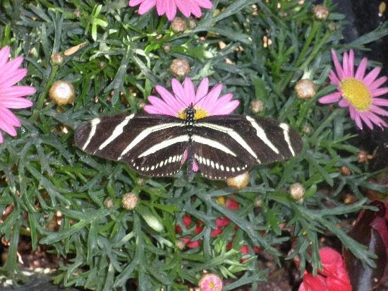 Merveilleux Desert Botanical Garden: Butterfly House