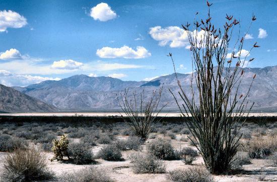 Боррего-Спрингс, Калифорния: Anza-Borrego Desert