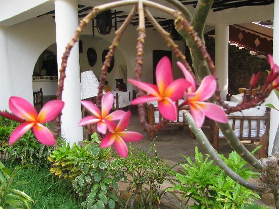 Scorpio Villas: i fiori