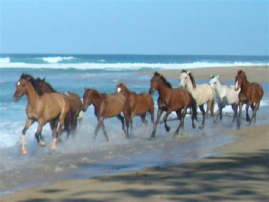 Coconut Palms Resort: Horses on the beach