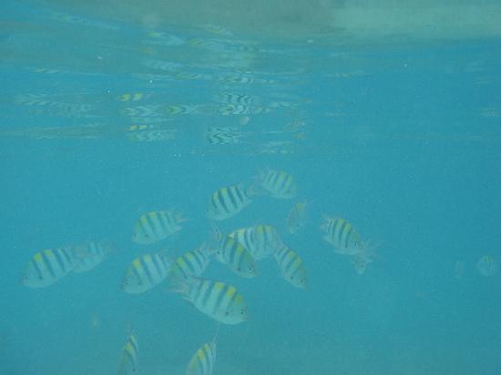 Shangri-La's Mactan Resort & Spa: snorkel