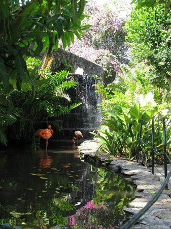 Talanquera Beach Resort: Flamingos in grounds