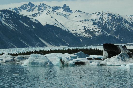 Bear Glacier icebergs