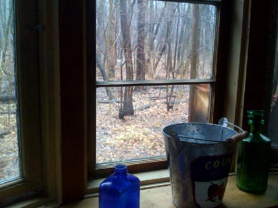 The White Rabbit Inn B&B : View of the woods from the kitchen window