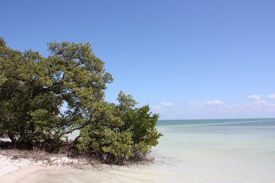 Islamorada, Flórida: Mangroves At Anne's Beach