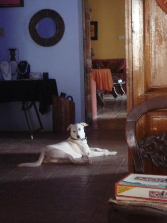 Casa Susegad: Blondie the 'top dog!' on the main entrance