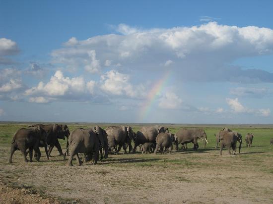 アンボセリ 国立公園, ケニア, 象があちこちにいます