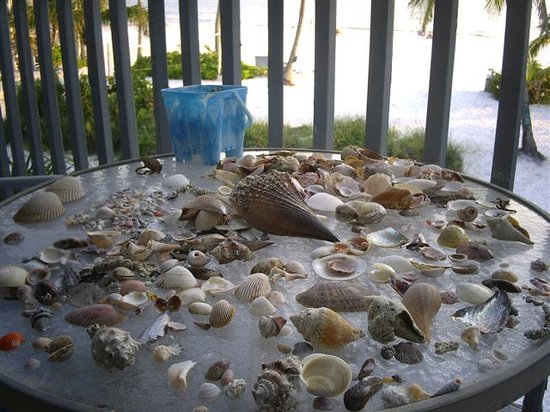 Fort Myers Beach, Floride : Shells bounty near Lahaina Inn, FL