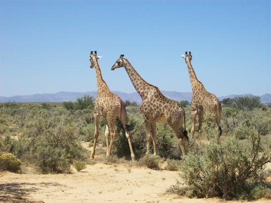 Cape Town Seamore Express Tours and Guesthouse: On safari!