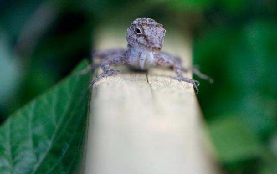 La Paloma Guest House: Lizard