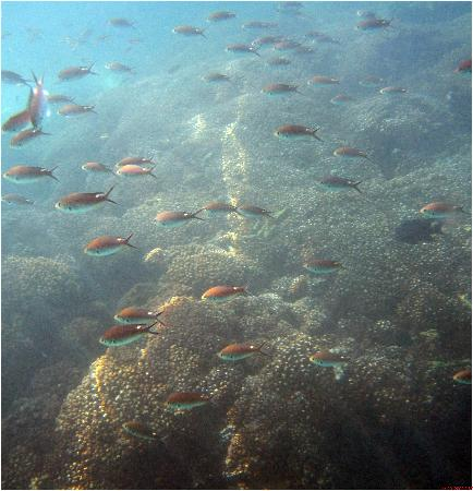 La Manzanilla, เม็กซิโก: snorkeling at Tenacatita Bay