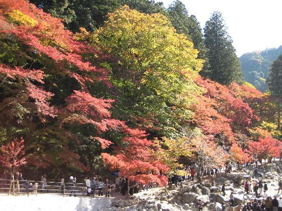 Korankei : きれいな紅葉
