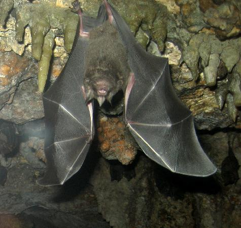 The Maryland Zoo: The bat cave is extremely realistic, though some children may be afraid to go inside.