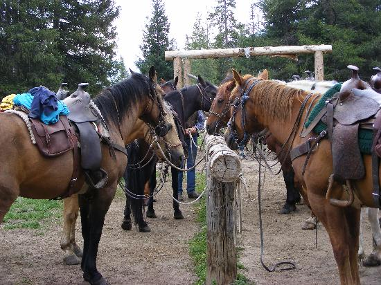 Covered Wagon Ranch: some of the wonderful reliable horses