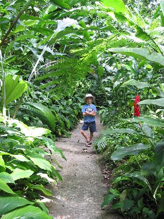 Montreal Gardens: Walking down a path in the garden