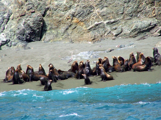Baja California, Mexico: Sea Lion Colony