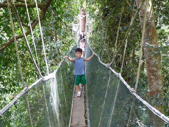 Shangri-La's Rasa Ria Resort & Spa: Canopy walking @ Poring Springs