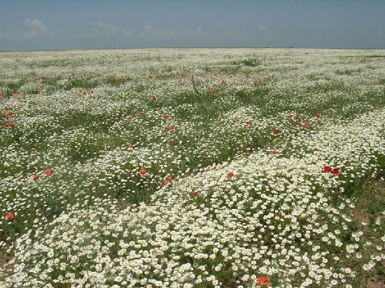 Krym: Crimean fields