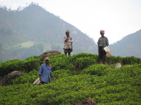 Ceylon Tea Trails: on our walk