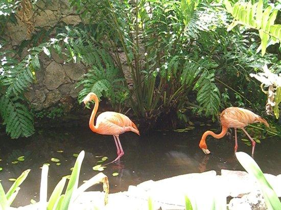 Talanquera Beach Resort: There really are flamingos!