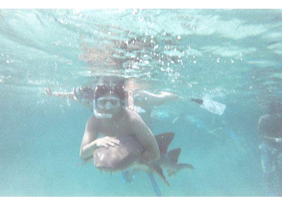 Lil Alphonse Snorkeling: Hug a nurse shark!