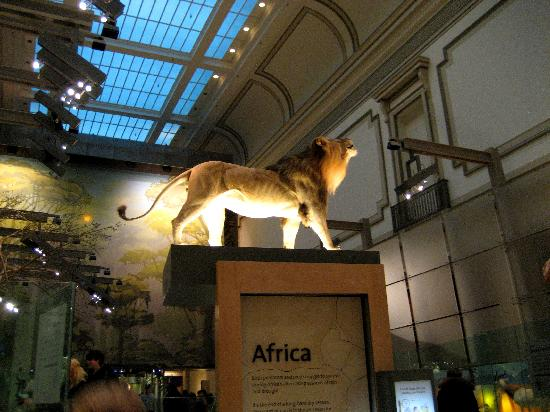 Smithsonian National Museum of Natural History: The African Mammals section of the Hall of Mammals.