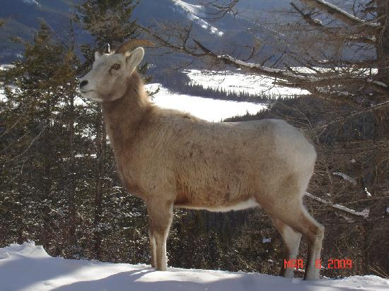 Mountain Home Bed and Breakfast: Oh, the Wildlife in Banff!