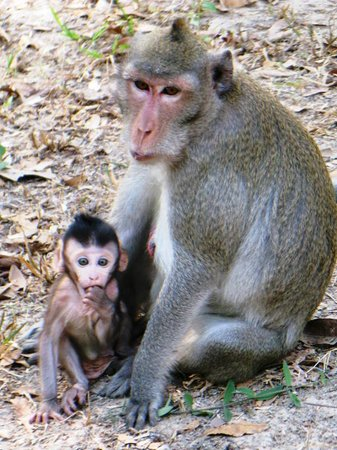 Kambodsja: Two of the natives of Angkor Thom