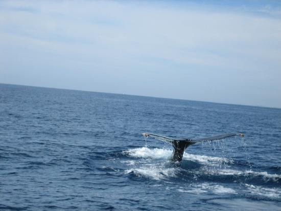 Cabo Sailing Ocean Adventures: Whale Watching