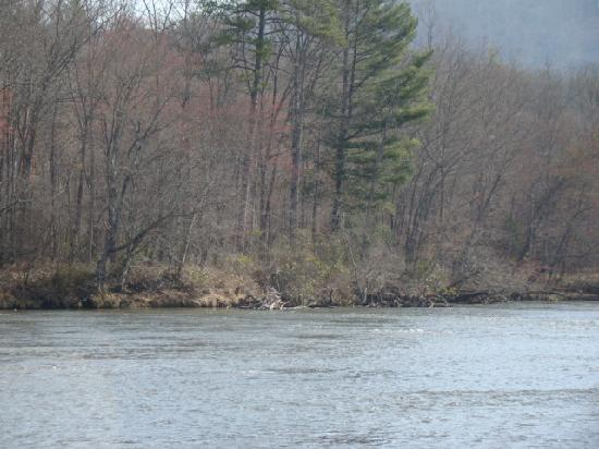 Asheville River Cabins: Just across the French Broad River