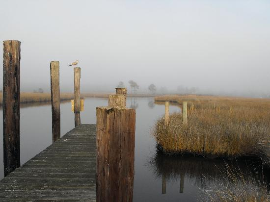 Swanquarter, Carolina do Norte: Swan Quarter Landing Marsh 1