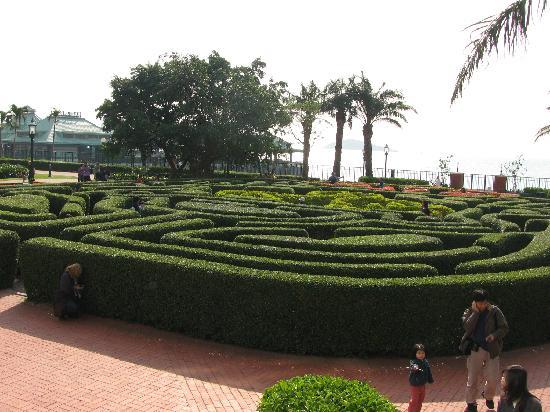 Disney's Hollywood Hotel: Fun at the maze at DH