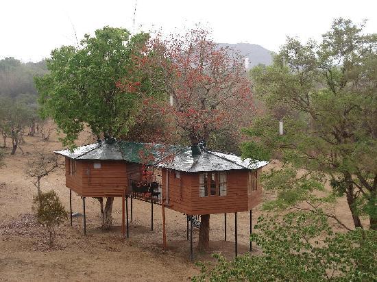 Forest hills farm guest house masinagudi tamil nadu for Indian bear lodge cabins