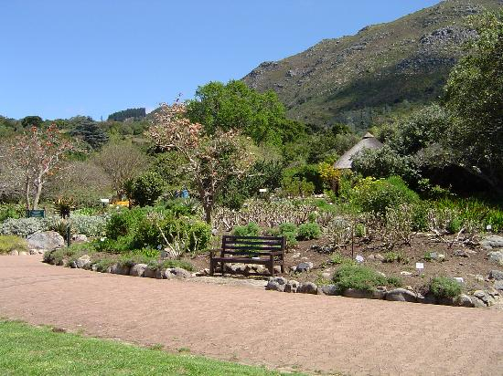 Penny Lane Lodge: Botanic garden near Cape Town