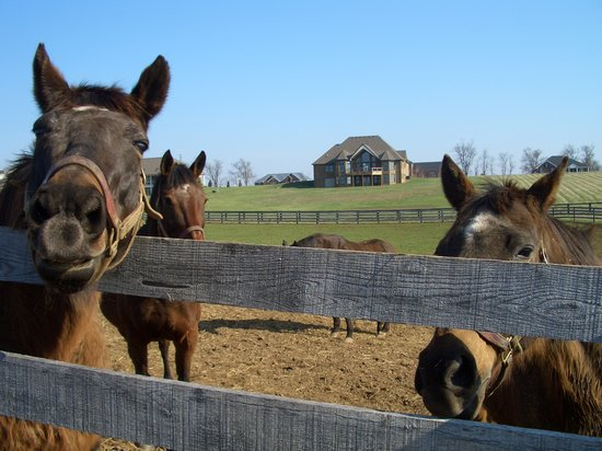 Old Friends at Dream Chase Farm: The treat line