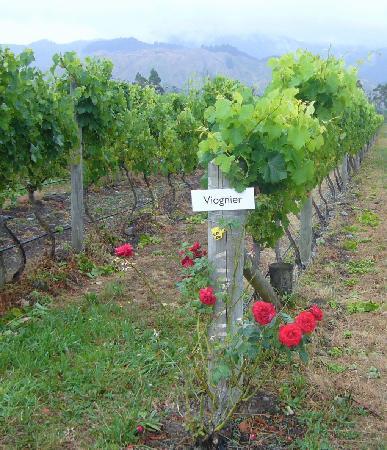 Hans Herzog Estate: Herzog vineyards, the view from the restaurant