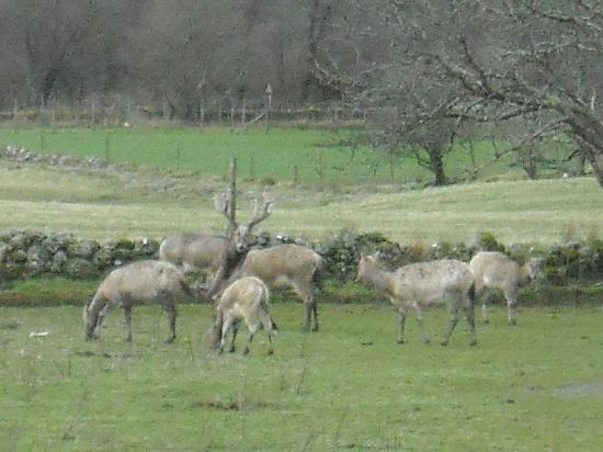 Bay Great Western Hotel : some of the nearby stags to be seen