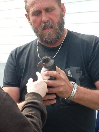 Jonesport, เมน: Naturalist explains baby puffins