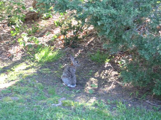 Huckleberry's Guest House: Bunny at Hucklebery's