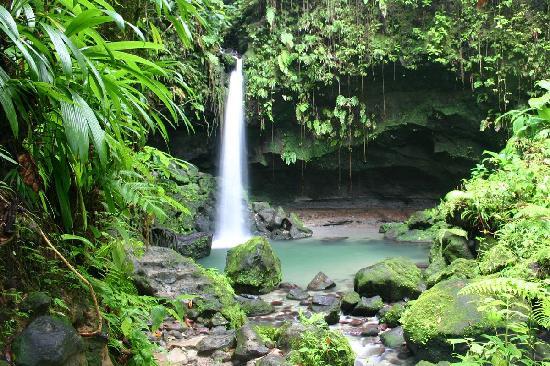 Emerald Pool Nature Trail: The Emerald pool Dominica
